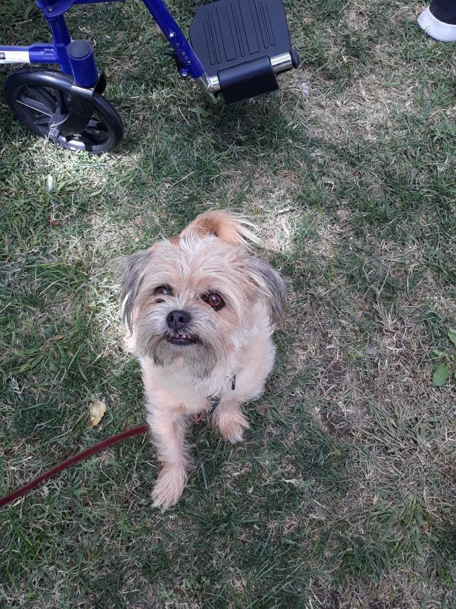 2019-09-20 ABQCS VIP Puppy